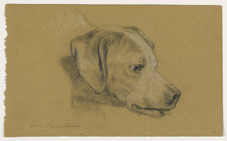 Head of a dog, facing right, with tongue out. Verso: Head of a dog, facing left.
