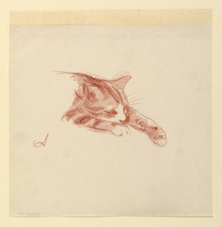 Study of the forequarters of a cat seen in right profile, with its left paw outstretched.