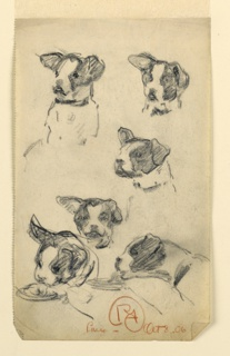 Six studies of the head of a small black and white spotted dog. The right ear is cocked up, and the left hangs limp. Two lower studies show the animal eating.