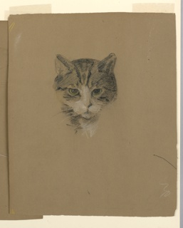Study of a cat's head, facing frontally with its ears up.