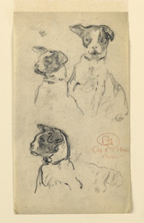 Three studies of the upper part of a small black and white spotted dog. The right ear is cocked up, and the left hangs limp. In the two studies at left, the animal is turned one-quarter to the left.