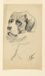 Study of the head of a dog resembling a St. Bernard, turned one-quarter to the left.