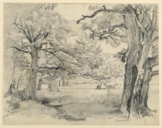 Sketch of a clearing in the woods, with large trees framing the composition.