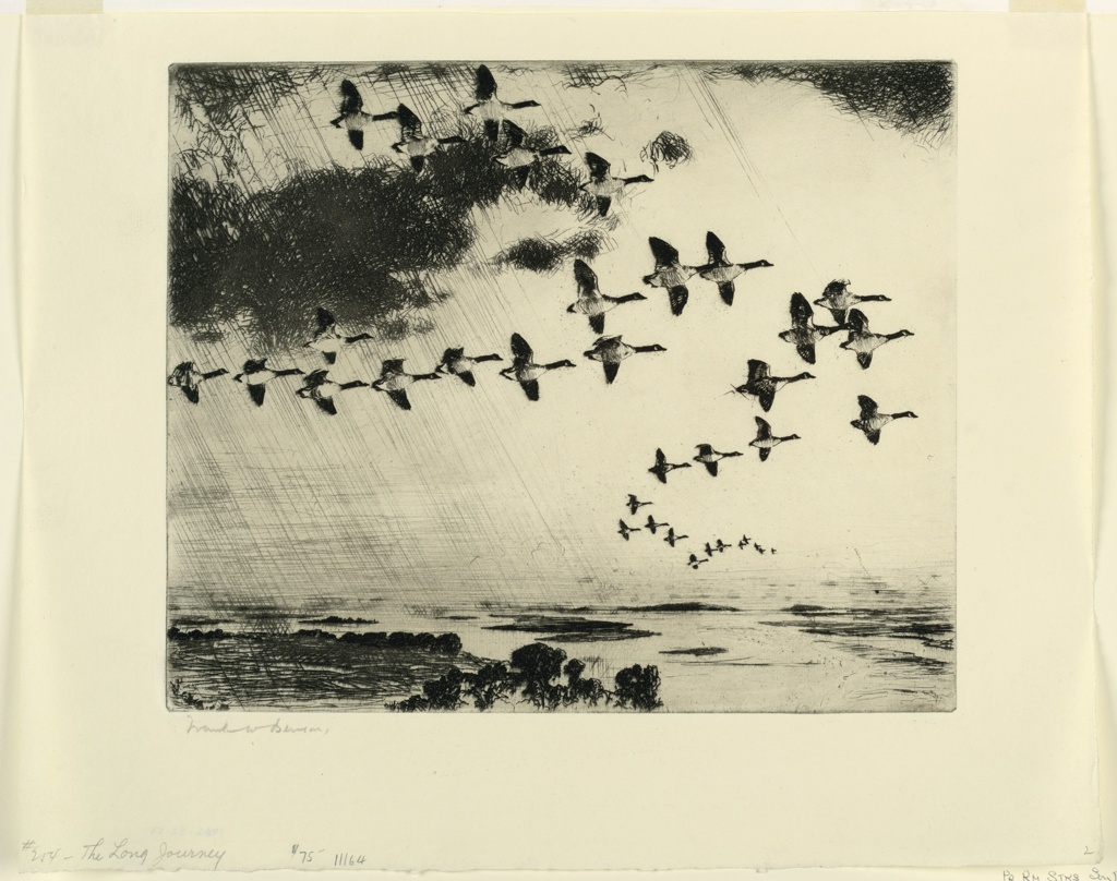 A large flock of geese are seen flying in formation to the right. A dark cloud at upper left. Marshlands below.