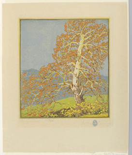 A large sycamore tree in right foreground with branches spreading out across the image. Mountain in background.