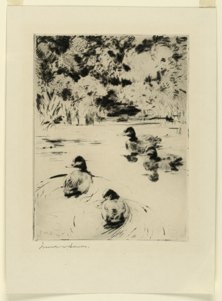 Four ducks are seen swimming in quiet waters. Heavy vegetation in the background.