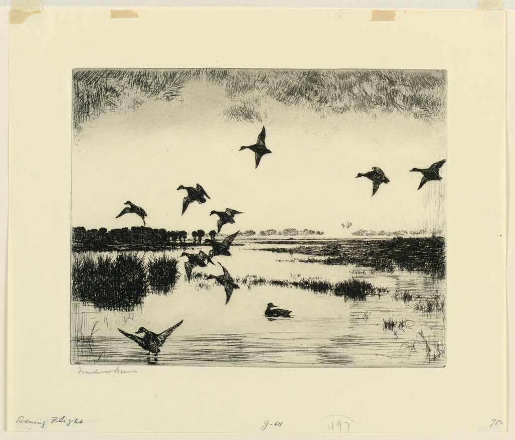 One duck is seen in marsh water. Ten others are in flight. Ducks and marsh grasses shown in deep shadow.