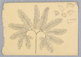 Diagrammatical study. Fourteen leaf-boughs branch, nearly symmetical from the main stem. Six designs of leaves are in the right top corner.