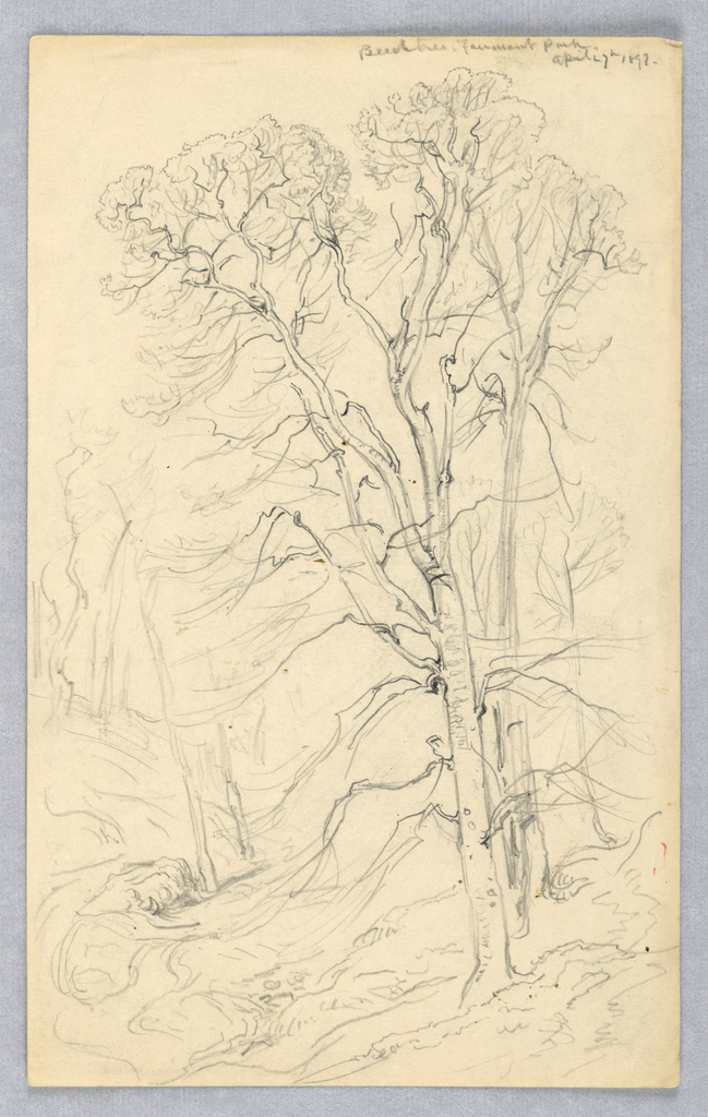 Vertical rectangle.  Obverse: A wood with a beech tree in the foreground on hilly ground.  Reverse, horizontally:  trees at the edge of the wood are shown at left, a hillside with a meadow and a group of trees in the background, at right.