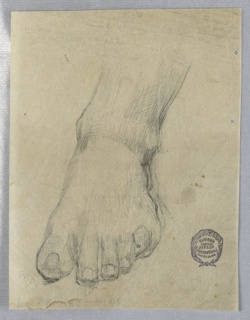 A left foot and ankle, seen from the front.