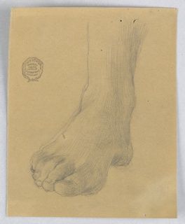 Study of a right foot and ankle, from straight on.  Toes pointing towards lower left corner.