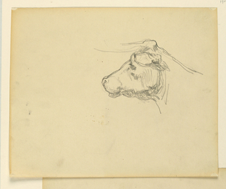 Partial sketch of a bull with horns.