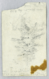 Study of the foliage of a pine tree, with notes above and below. Verso: Notations of expenses.