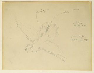 Sketch of a bird in flight.