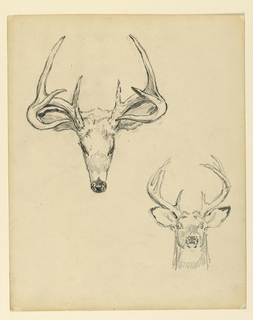 Two sketches of a stag head from different perspectives.