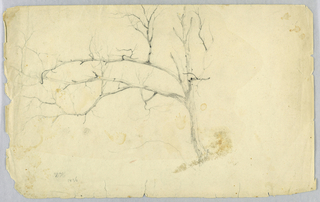 Study of a leafless tree. The trunk is turned to the right, with its two main branches extending to the left.
