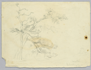 Study of two pine trees, at left. Other tree trunks, left, and man on a rise, right, lightly sketched.