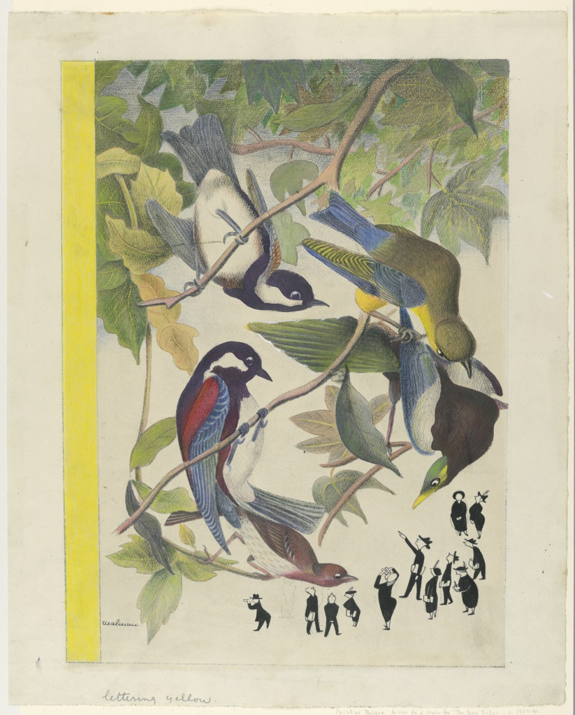 Drawing of large, colorful birds perched in tree branches peering down at a group of the Audubon Society bird-watchers represented in small scale black and white. They point, take notes, and look through field glasses. Birds depicted based on Audubon prints.