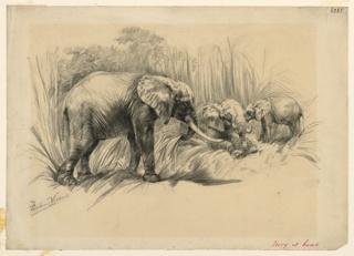 Three elephants, one standing left, eating grass.