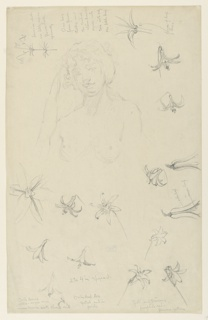 Sketch of a nude female figure and details of flowers.
