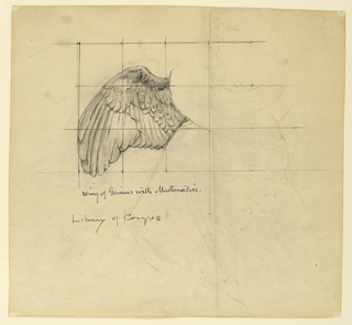 Sketch of an outspread wing. The paper is squared for transferring the image.