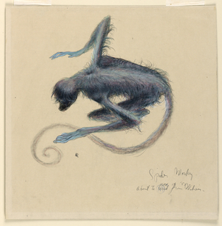 A small, blue monkey, seen from above, crouches, turned towards the left. His tail forms a spiral, lower left.