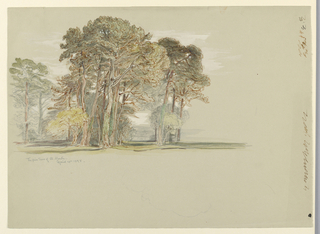 A group of pines is flanked by two pines at left, a row of pines at right. Bottom, inverse direction, pencil outline of a tree top.