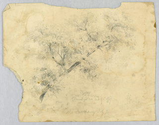 Study of a tree branch with foliage. Verso: Tree study.