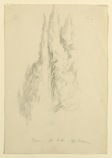 Sketch of the tops of a group of cypress trees. Verso: Part of a scroll.