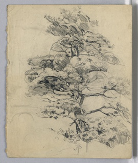 Drawing of entire tree with foliage and branches in detail; most of foliage is done with quick curve linear lines. At base of tree to right other vegetation grow.