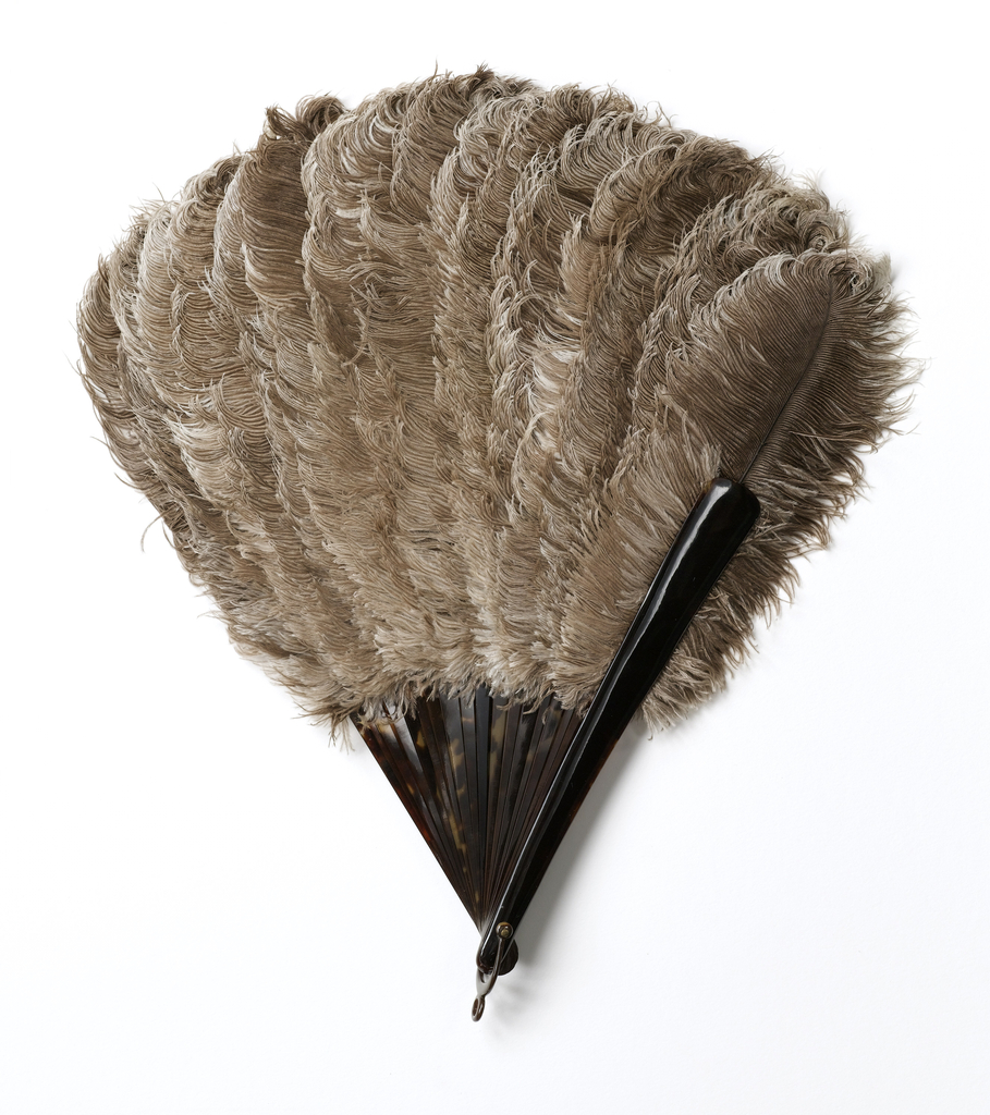 Brisé fan. Natural-colored, uncurled ostrich feathers applied to sticks which are tortoise shell to the shoulder; the remainder to the tip is whale bone to which the feathers are attached with thread. Brown satin ribbon.