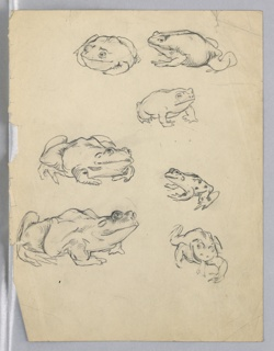 Seven frogs of varying sizes in different poses.