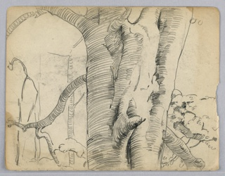 Large tree in center showing portion of trunk with branches. Sketches of other trees in background.
