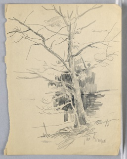 Large tree growing at right, leaning slightly toward left, with branches extending into most of upper right. There is no foliage on the branches; at center of tree dark shading indicates other trees behind.