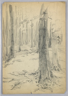 Large tree trunk stands at right foreground, two other at far right and far left, respectively; still others getting progressively smaller and more numerous.