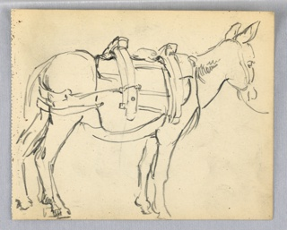 Side view of mule facing right, with ears pointing upward . Mule with yoke for carrying packs across its back.