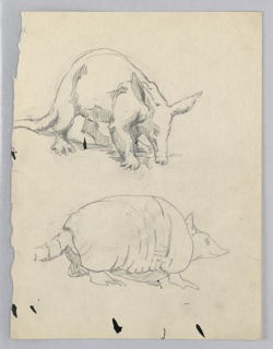 Anteater at top, facing right, nose to ground. Armadillo at bottom of page, also facing left.
