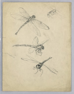 Three dragonflies in varying poses.