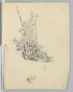 Bush with thick-steamed flowers, small and bell-shaped. Bottom, in reverse, a sketch of a woman's head.