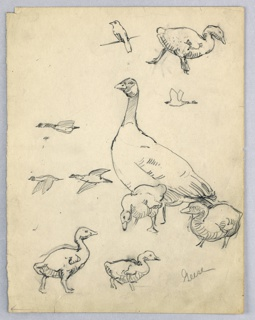 Geese, full grown, surrounded by small geese. At left, three birds in flight.