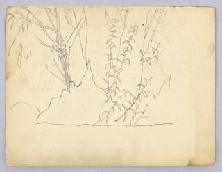 Sketch of greenery, tree at left leaning slightly toward left, bush in front of tree indicated in outline only. Tall, leafy plant at right.