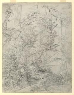 Sketch of foliage growing near water.