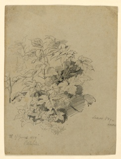 Sketch of a tree with foliage.