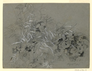 Sketch of violet leaves and grass.