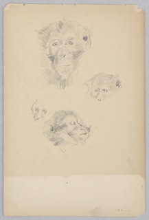 Four sketches of a monkey.
