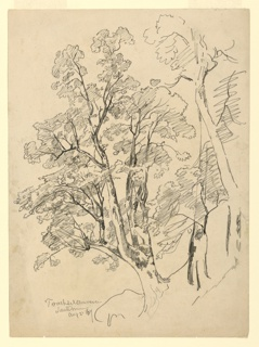 Sketch of trees with foliage.