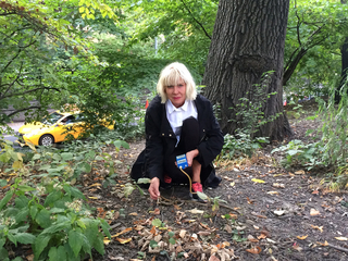 Smell, The Beauty of Decay: SmellScape Central Park Autumn 2015
