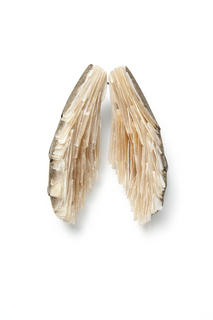 Brooch, Wings, from the Curiosity Collection, 2013