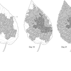 Patent Drawing, Bioaerosol Microtrapping Biofilm, from Designing for the Sixth Extinction, 2013
