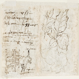 Recto: Above left: winding silk by steaming silkworm cocoons and reeling the raw silk from the cocoons. Below left: Gathering the mulberry leaves outside. Above right: Spreading the leaves on trays. Lower right: Feeding mulberry leaves to the silkworms.Verso: inscription, a stack of trays, a leaping lynx. At right, detail studies of three mulberry leaves, on a large scale.